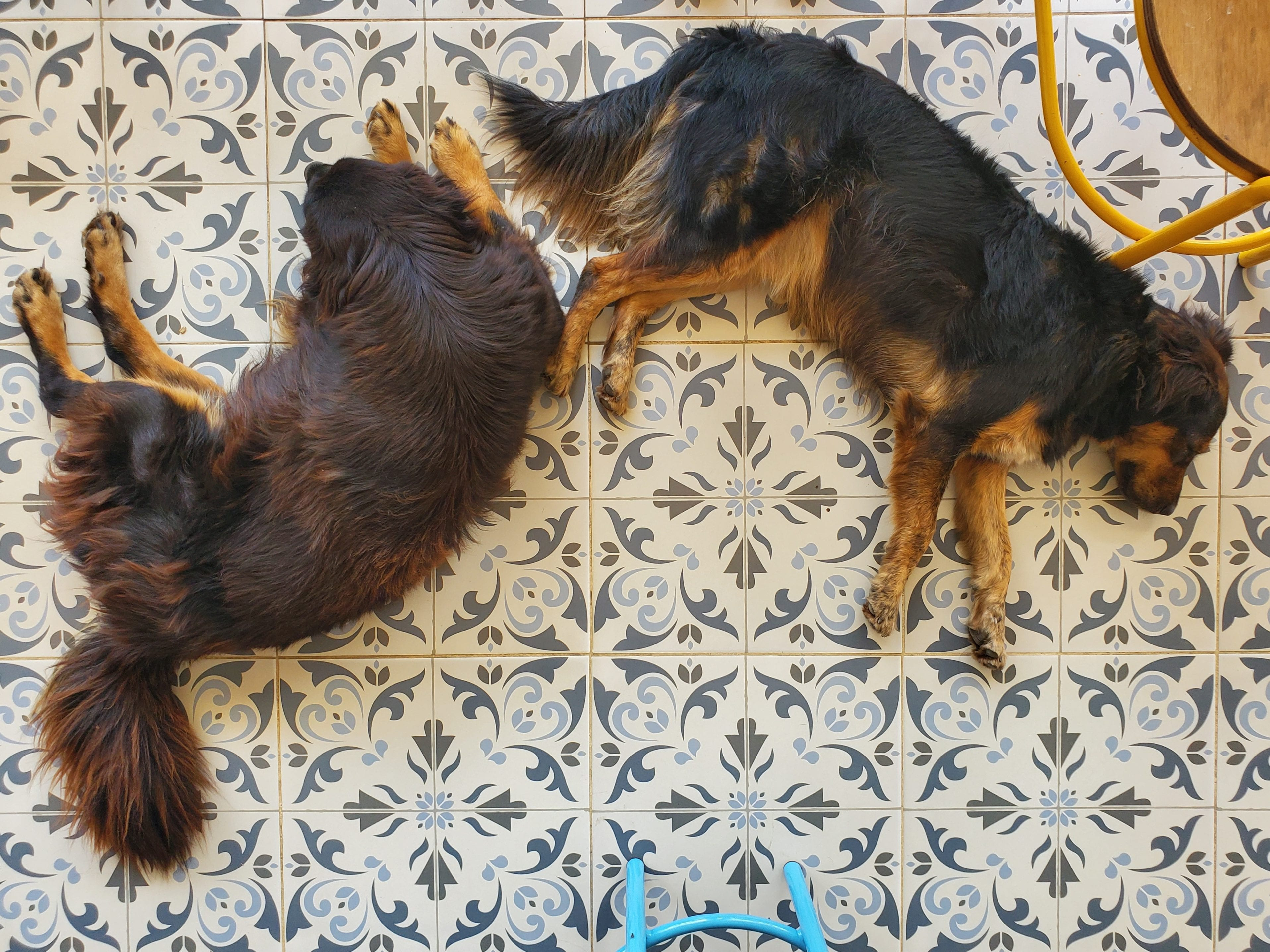 Dogs laying down in Jardin cafe