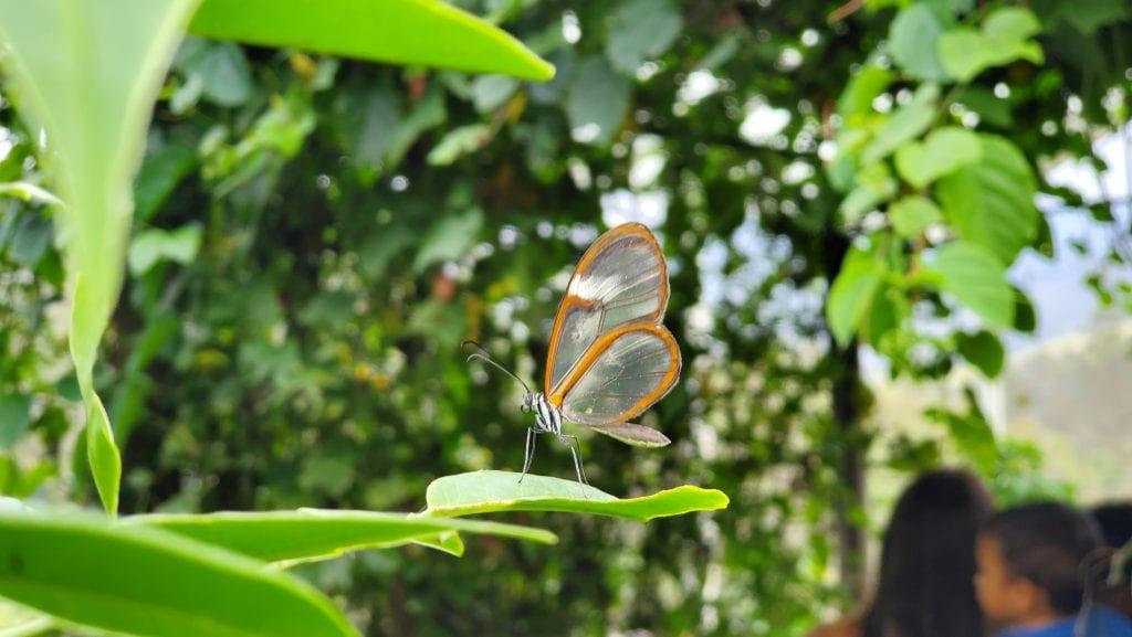 Recinto del Pensamiento Butterfly