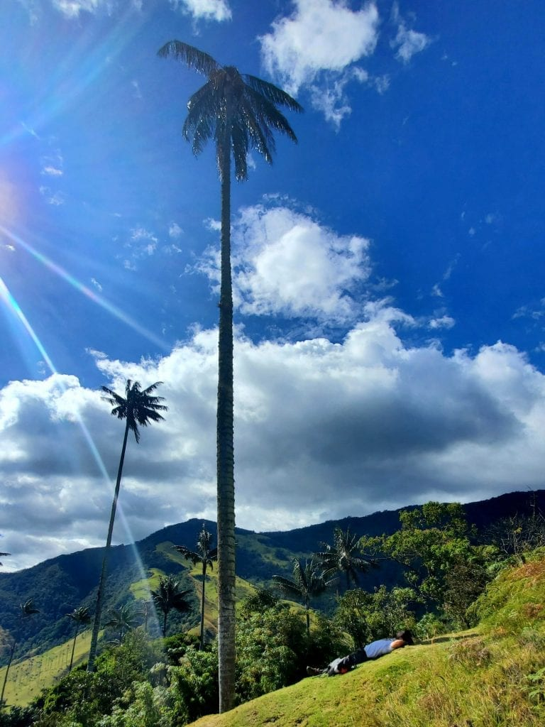 Cocora Valley Palm Trees