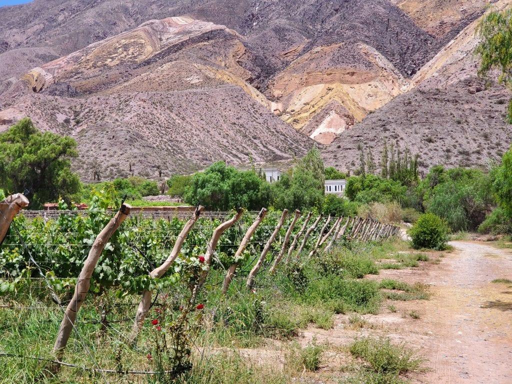 bodegas dupont vineyard