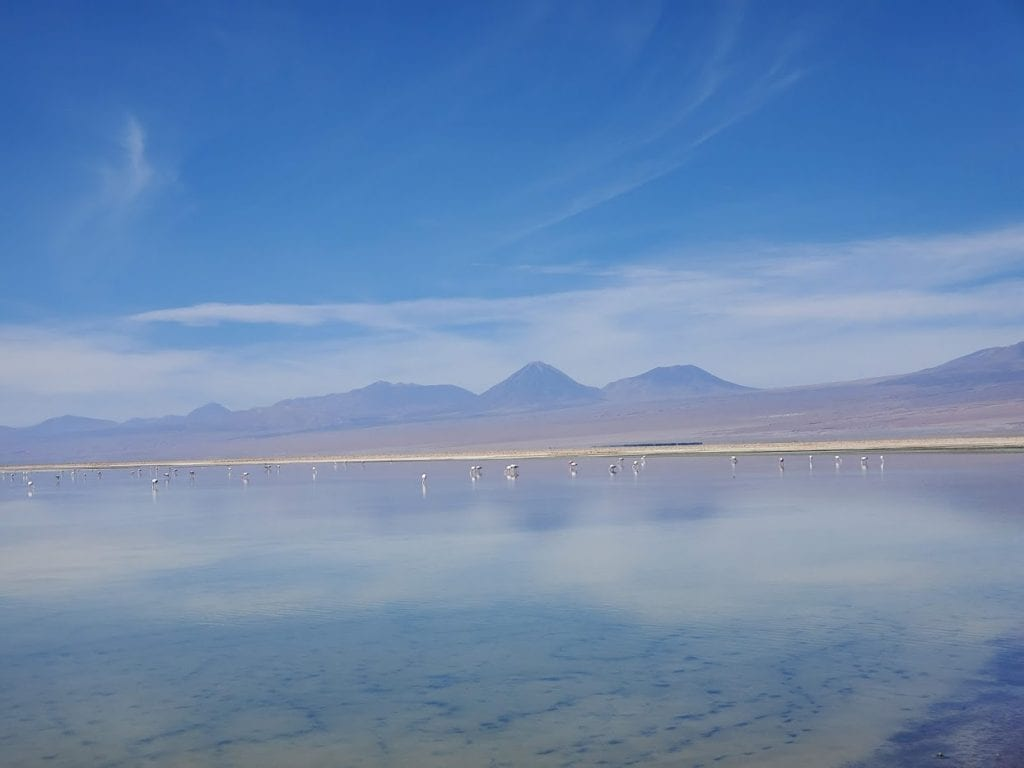 San Pedro de Atacama Flamingo Lake